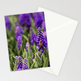 PHOTOGRAPHY / MUSCARI & BEE 01 Stationery Cards