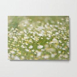 White Daisies Metal Print