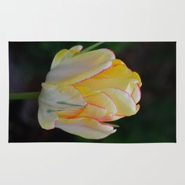 Red-Tipped Tulip by Teresa Thompson Rug