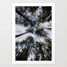 The Forest Canopy Art Print