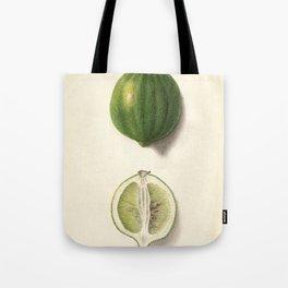 Vintage Illustration of a Lime Tote Bag