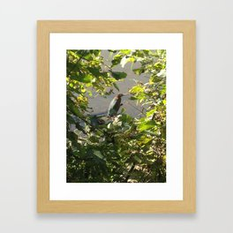 Green Heron Framed Art Print