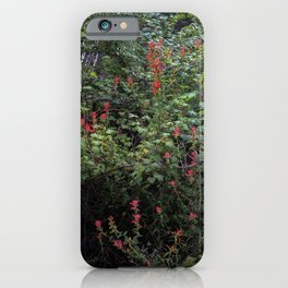 Indian Paintbrush on a Forest Trail iPhone Case