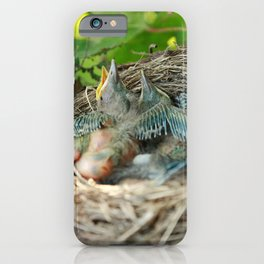 Azores blackbird nest iPhone Case