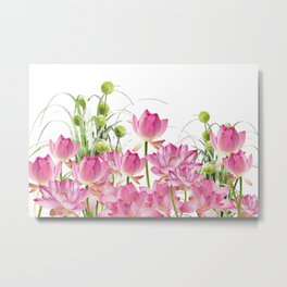 Field of Lotos Flowers Metal Print