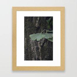 Japanese Gingko Leaves Framed Art Print