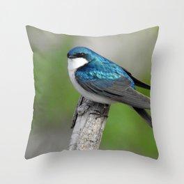 Male Tree Swallow II Throw Pillow