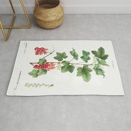 Redcurrant (Ribes rubrum) from Traite des Arbres et Arbustes que lon cultive en France en pleine ter Rug