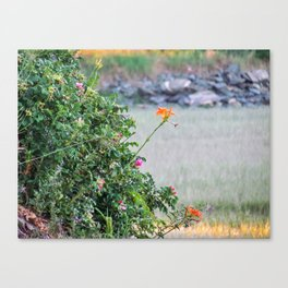 Low Tide Tiger Lillies Canvas Print