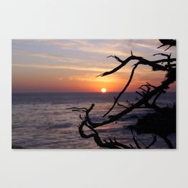 Sunset by the Lonely Cypress. Canvas Print