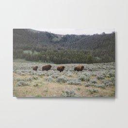 Bison III Metal Print