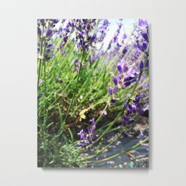 Lavender Bumble Bee Metal Print