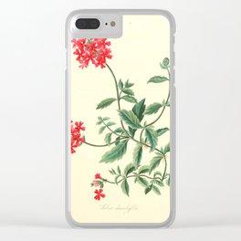Roscoe, Margaret (1786-1840) - Floral Illustrations of the Seasons 1831 - Verbena Chamaedrifoli Clear iPhone Case