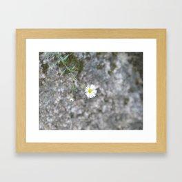White flower on the stone Framed Art Print