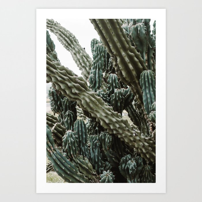 Cactus V Art Print