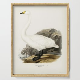 Whooper Swan (Cygnus cygnus) illustrated by the von Wright brothers Serving Tray