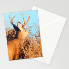 Lone Buck Stationery Cards