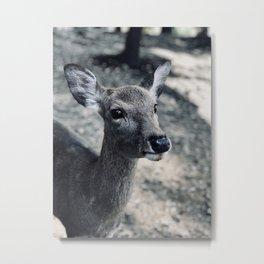Deer Nara Metal Print