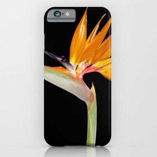 Birds of Paradise Flower iPhone & iPod Case