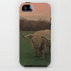 Scottish Highland Steer Tough Case iPhone (5, 5s)