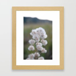 Colorado Wildflower #529 Framed Art Print