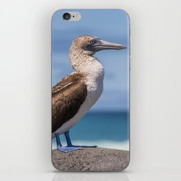 Galapagos blue footed booby bird photography iPhone Skin