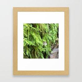 Mossy Mushroom Framed Art Print