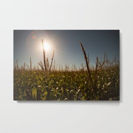Corn Field 18 Metal Print