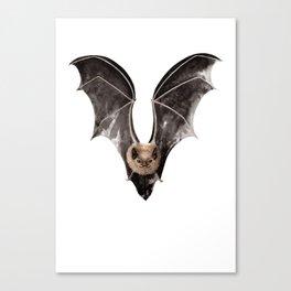 Long Tailed Bat / Pekapeka Canvas Print