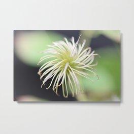 When the flower is gone -- clematis seed macro art print  Metal Print