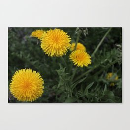 weedsonweeds Canvas Print