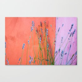 Lavendula Canvas Print