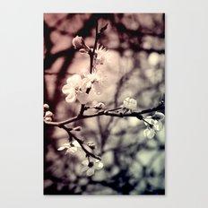 Tree Blossom Canvas Print