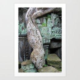 Snake Vine, Cambodia Art Print
