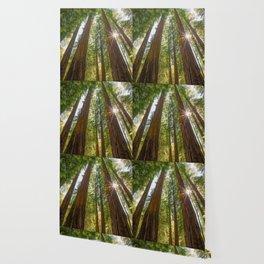 Majestic California Redwoods Wallpaper