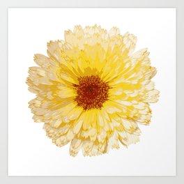 Beautiful Yellow Marigold Vector Isolated Art Print