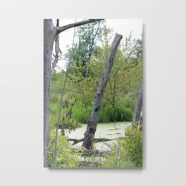 Trees and Brush in the Swamp Metal Print