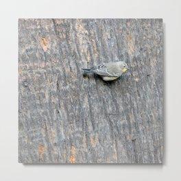 TEXTURES -- Warbler on Palm Bark Metal Print