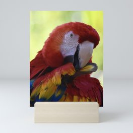 Pretty Preening Parrot Mini Art Print