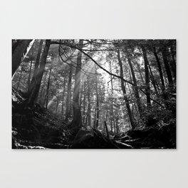 Sunrays Through the Trees Canvas Print