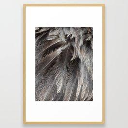 Feathers of an Emu Gerahmter Kunstdruck