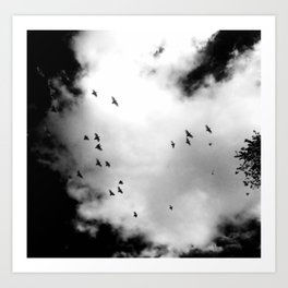 Birds (Black and white) Art Print