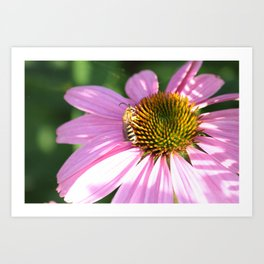 The wasp on the flower Art Print