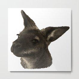 Kangaroo canvas, animal photo, australian animal Metal Print