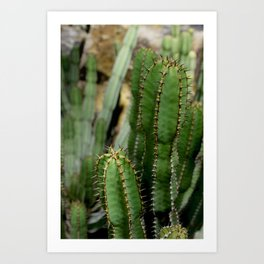 Cactus plants stand together botanical photography no 5 Art Print