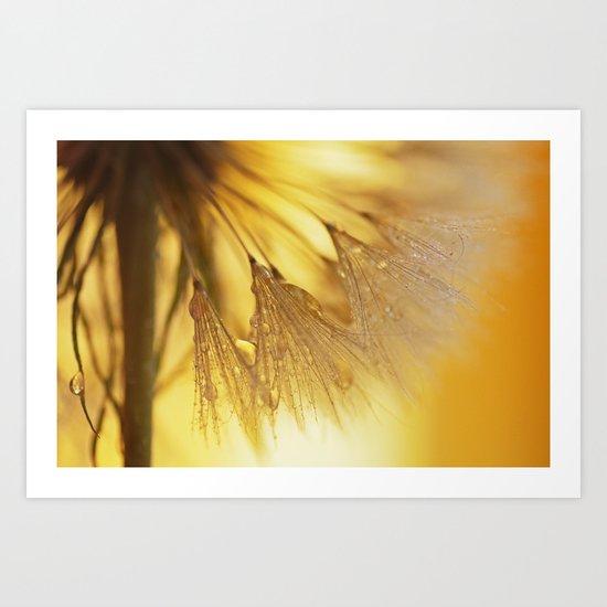 Dandelion Light Art Print