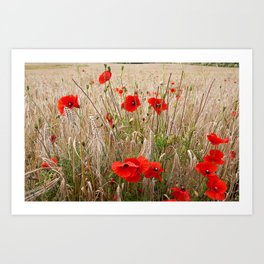 Poppies in cornfield Art Print