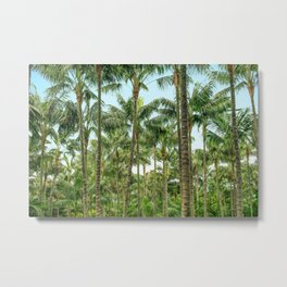 palm tree forest, coconut trees jungle background Metal Print