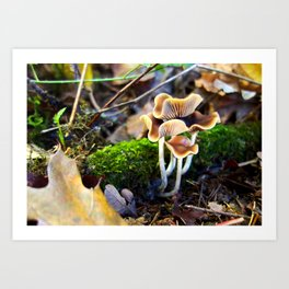 Naturals Art Print