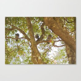 Incense tree with pigeons Canvas Print
